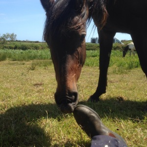 Aoife nibbles my shoe