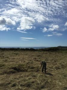 Hay drying in Fastnet field