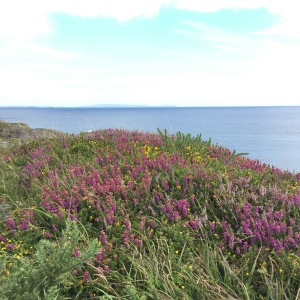 Coastal Heathland