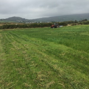tractor topping weeds