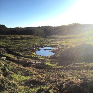 Green manure and pond