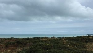 November sky, with horses and the Fastnet Rock on the horizon.